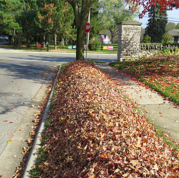 leaf pile on grassy part of sidewalk